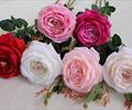Ветка розы-шиповник.