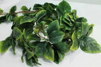 Лианы листья 004