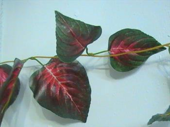 Лиана с листьями.